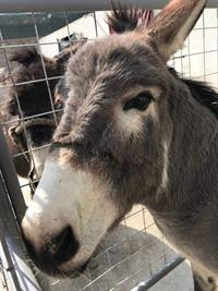 Sponsor a Nowzad Donkey Stable