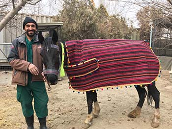 A first for NOWZAD! Our first ever horse rescue!