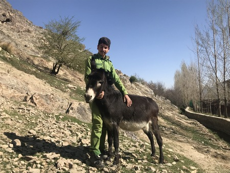 The Nowzad Donkey Sanctuary is only a year old, but it has filled up fast!