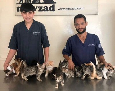 The Nowzad clinic is flooded with Kittens!