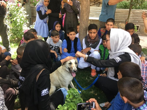 Education, Veterinary Training and School Visits