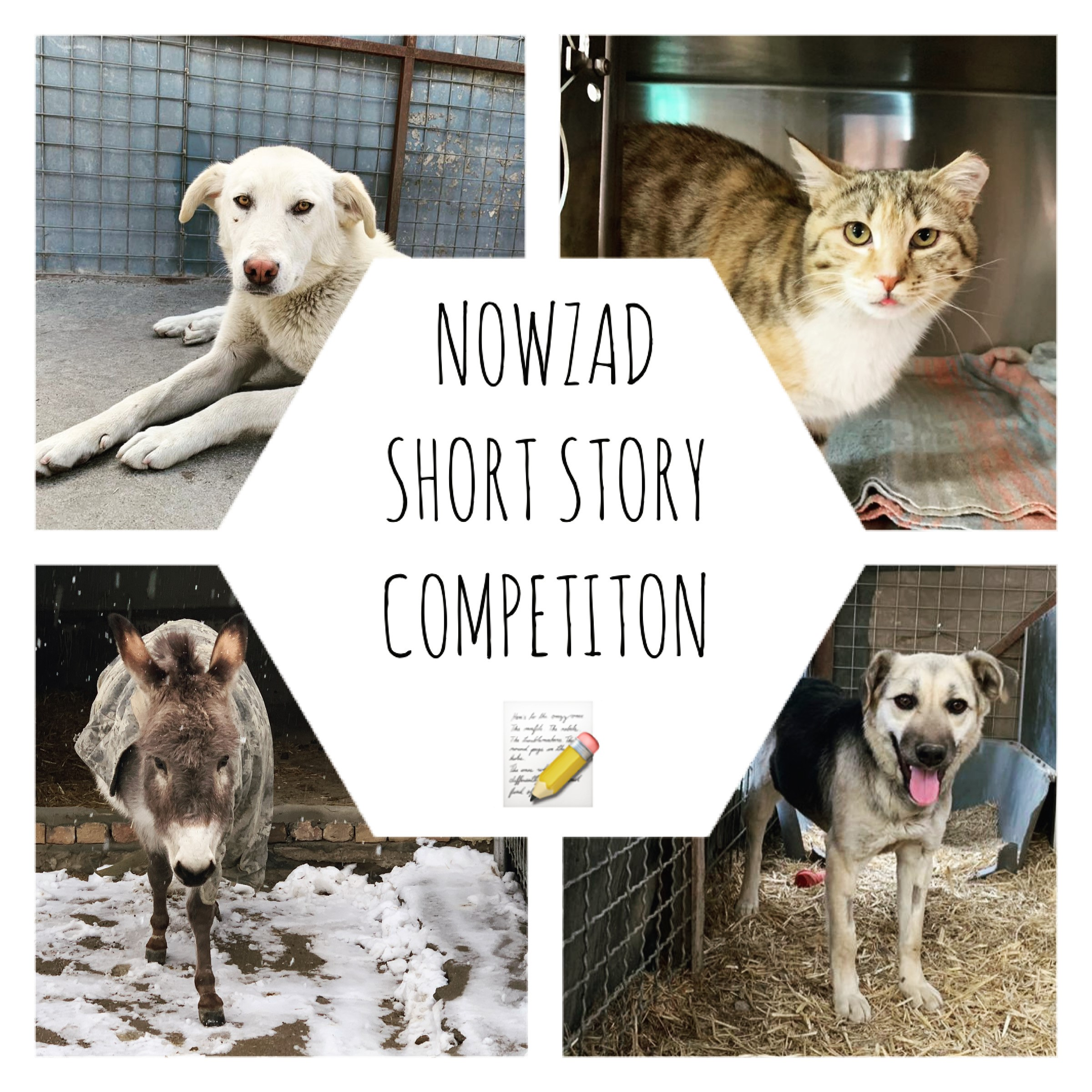 Nowzad Short Story Competition Winners!