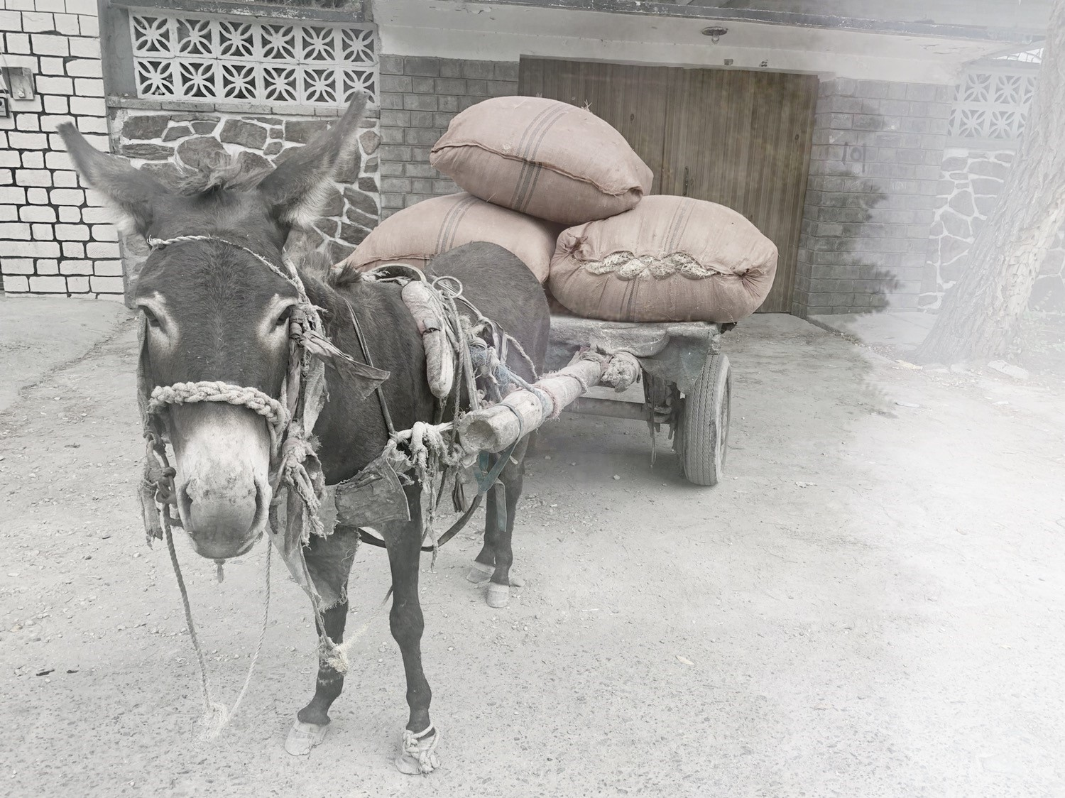 Will you help ease the pain and suffering of working donkeys in Afghanistan today?