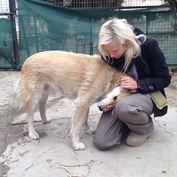 Nowzad's policy statement on the import of dogs into the UK